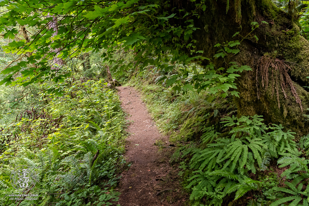 Trail to the top of Golden Falls at Golden and Silver Falls State Natural Area near Allegany in Oregon.