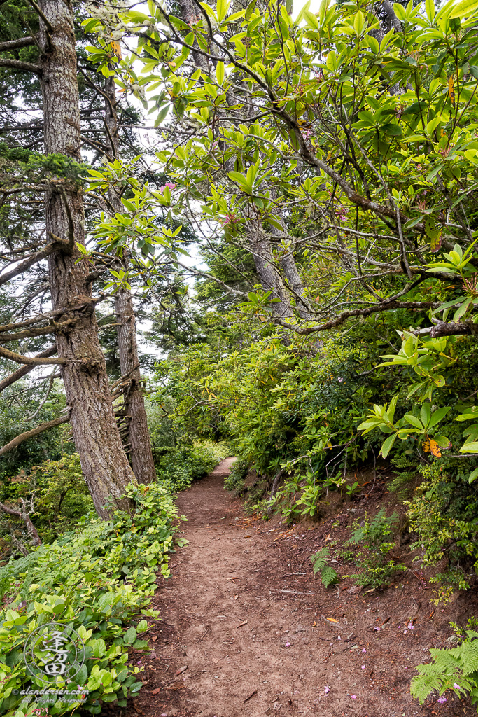 Hiking trail around Lake Marie, a pretty little lake within the confines of Umpqua Lighthouse State Park near Winchester Bay, Oregon.