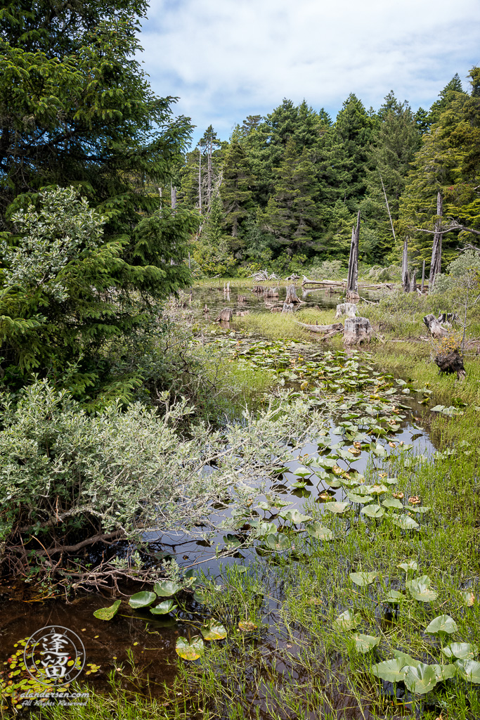 View of a stream feeding marshy area bordering Eastern side of Lower Empire Lake at John Topits Park in North Bend, Oregon.