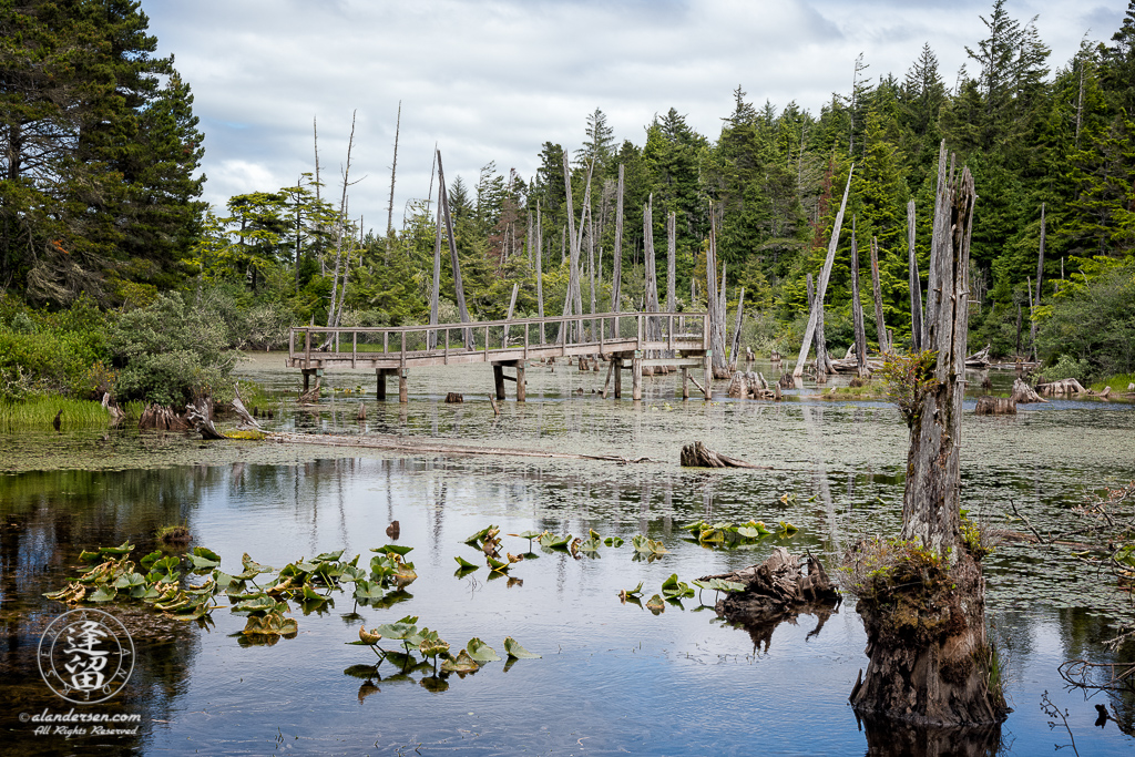 Disused wooden foot bridge over Lower Empire Lake at John Topits Park in North Bend, Oregon.