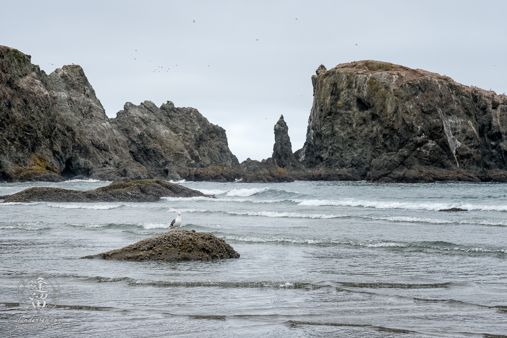 A seagull perched on a rock as the waves break on the shore of the beach at Coquille Point in Bandon, Oregon.