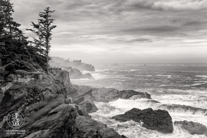 An evergreen tree atop a cliff during a storm at Shore Acres State Park outside of Charleston in Oregon.
