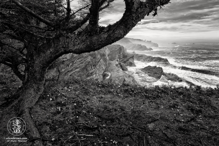 Cliff-side view from beneath a tree of crashing waves during a rain storm at Shore Acres State Park in Oregon.