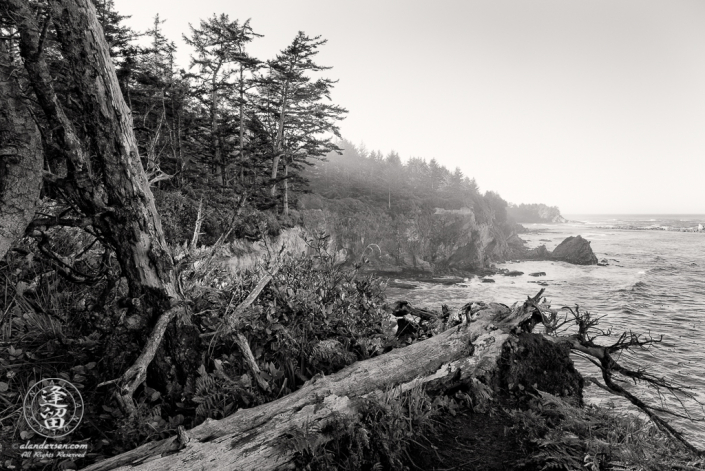 A tree trunk lies on the edge of a cliff near Shore Acres State Park outside of Charleston in Oregon.
