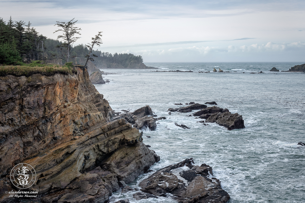 Pair of evergreen trees on cliff edge overlooking pacific ocean near Charleston in Oregon.