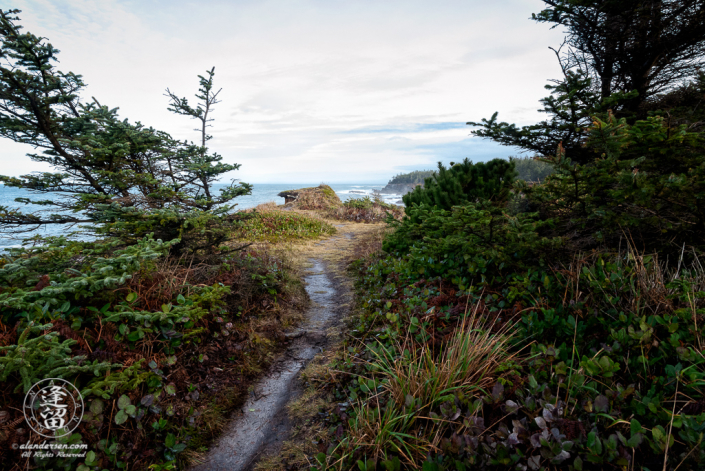The Pacific Coast Trail, looking North toward Shore Acres State Park outside of Charleston in Oregon.