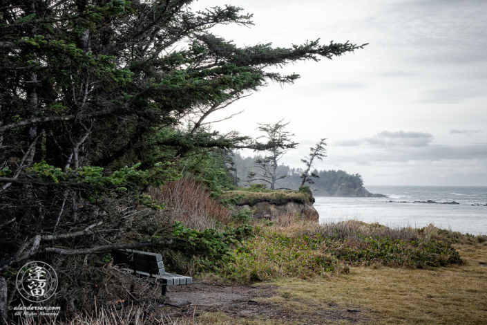 Wooden bench tucked beneath trees overlooking Pacific Ocean from atop a cliff.